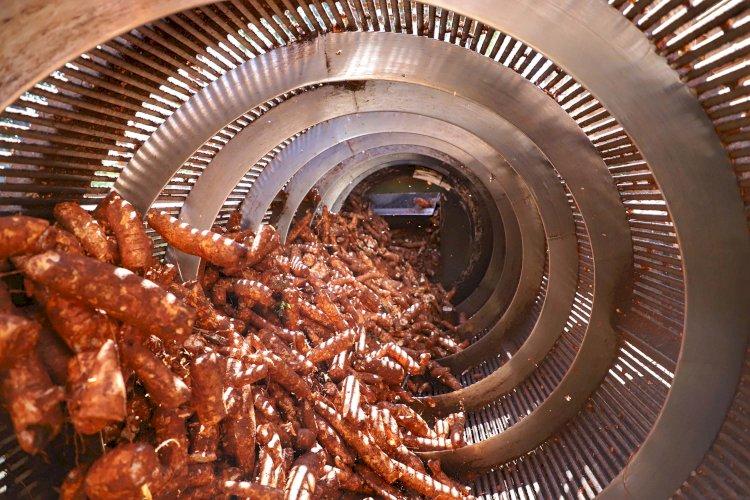 Biogás gera economia na indústria de fécula paranaense